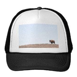 Colina del búfalo gorros
