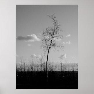Colina solitaria del árbol póster