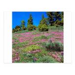 Colinas California de Sierra de la primavera de la Tarjetas Postales