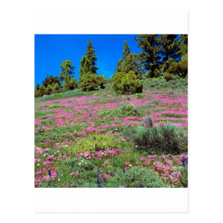 Colinas California de Sierra de la primavera de la Postal