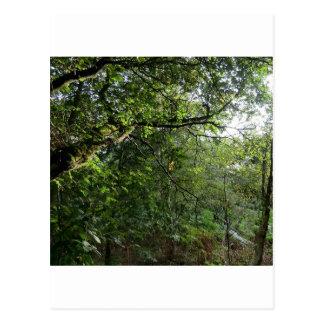 Colinas de Hednesford, Staffordshire Postales