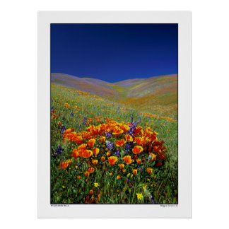 Colinas del Wildflower Posters