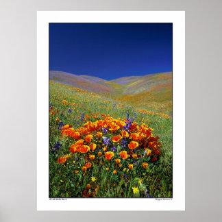 Colinas del Wildflower Impresiones