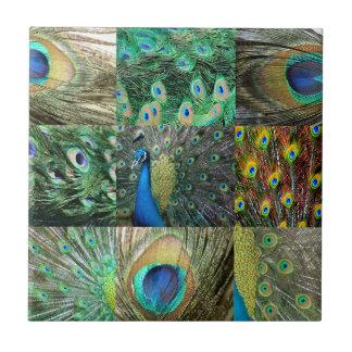 Collage azulverde de la foto del pavo real azulejos cerámicos