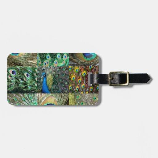 Collage azulverde de la foto del pavo real etiquetas de equipaje