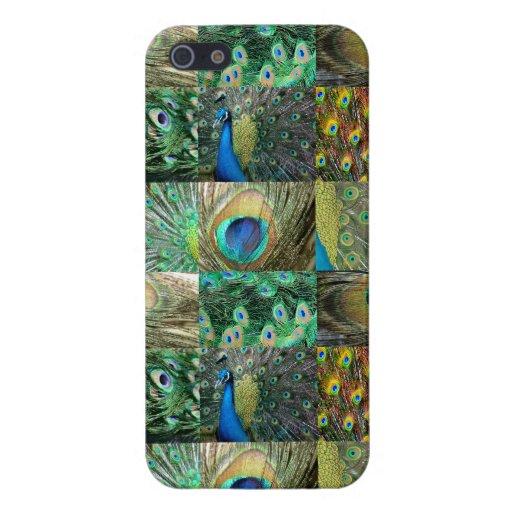 Collage azulverde de la foto del pavo real iPhone 5 protector