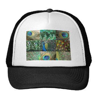Collage azulverde de la foto del pavo real gorros