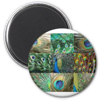 Collage azulverde de la foto del pavo real imán redondo 5 cm
