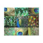 Collage azulverde de la foto del pavo real lona envuelta para galerias