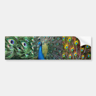 Collage azulverde de la foto del pavo real pegatina para auto