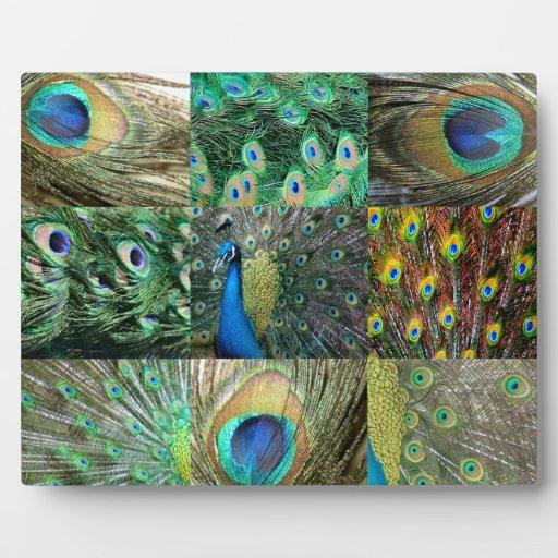 Collage azulverde de la foto del pavo real placas de plastico