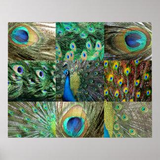 Collage azulverde de la foto del pavo real póster