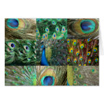 Collage azulverde de la foto del pavo real tarjeton