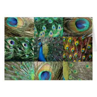 Collage azulverde de la foto del pavo real tarjeta de felicitación