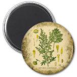 Collage botánico del ajenjo iman