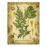 Collage botánico del ajenjo postales