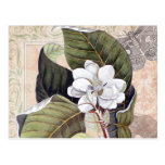Collage botánico del vintage con la magnolia postal