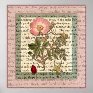 Collage color de rosa rosado antiguo elegante del  póster