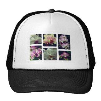 Collage de la flor de la orquídea gorro
