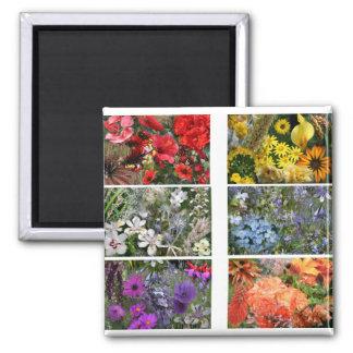 Collage de la foto de la flor del arco iris iman de nevera