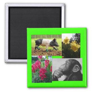Collage de la foto imán cuadrado