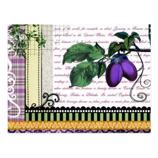 Collage de la fruta de los ciruelos del vintage tarjeta postal