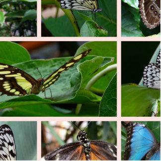 Collage de la mariposa escultura fotográfica