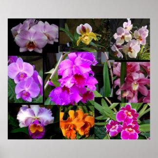 Collage de la orquídea póster