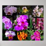 Collage de la orquídea posters