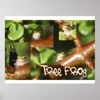 Collage de la rana arbórea, mismas diversas actitu impresiones