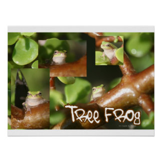 Collage de la rana arbórea, mismas diversas actitu póster