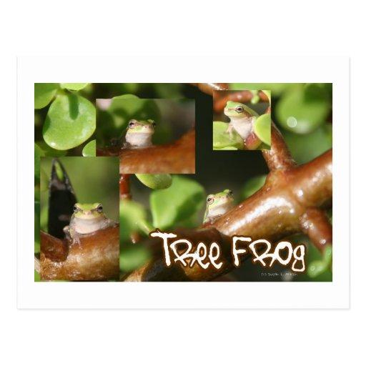 Collage de la rana arbórea, mismas diversas actitu tarjeta postal