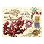Collage de la vida marina con los matasellos y los tarjetas postales