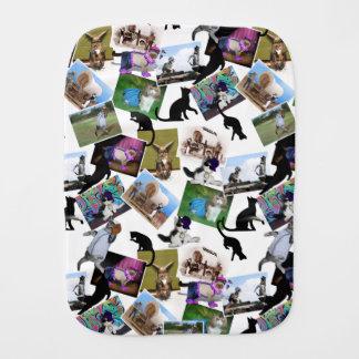 Collage de las fotografías del gato