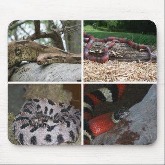 Collage de las serpientes tapete de raton