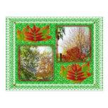Collage de los árboles de la caída postal