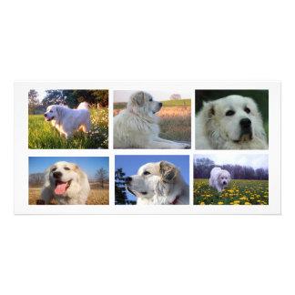 Collage de los grandes Pirineos Tarjetas Personales Con Fotos