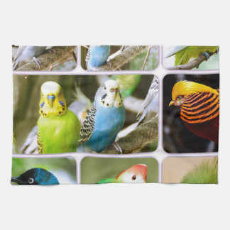 Collage del animal de Bugie del pájaro