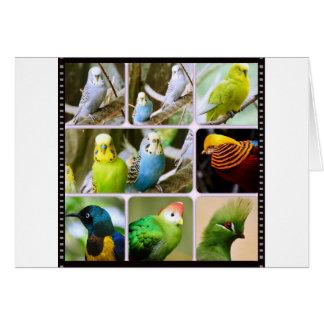 Collage del animal de Bugie del pájaro Tarjetas