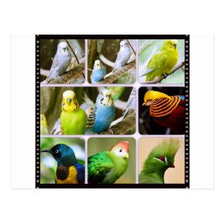 Collage del animal de Bugie del pájaro Tarjeta Postal