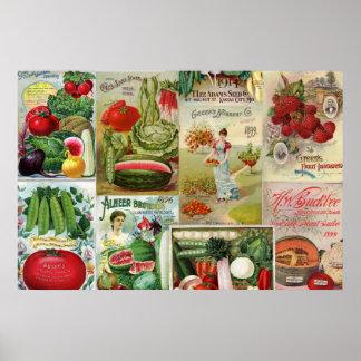 Collage del catálogo de la fruta y de semilla de póster