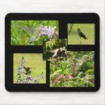 Collage del colibrí tapetes de ratón