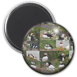 Collage del frailecillo imán redondo 5 cm