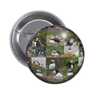 Collage del frailecillo pin