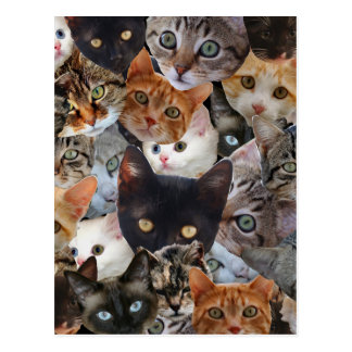 Collage del gatito tarjeta postal