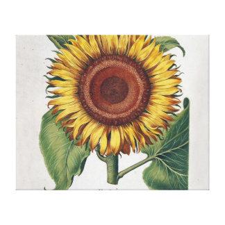 Collage del papel pintado del damasco del vintage impresión en tela