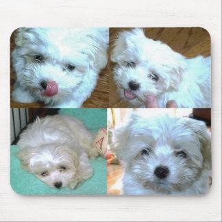 Collage del perrito de Riley Malti-poo Alfombrilla De Raton