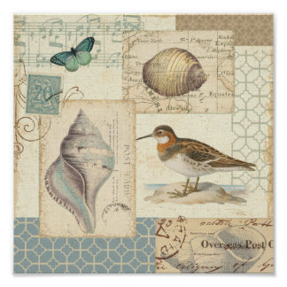 Collage del Seashell Póster