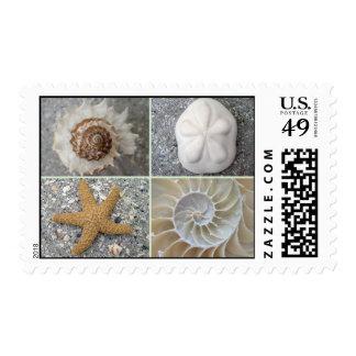 Collage del Seashell Sello