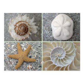 Collage del Seashell Tarjeta Postal